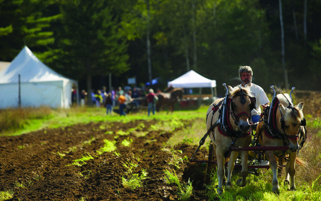 Common Ground Country Fair, Unity, Maine