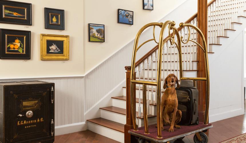 Dog Friendly, Camden, Maine