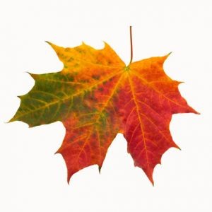 """FROM THE BANGOR DAILY NEWS- """"THESE FALL FOLIAGE HIKES LEAD TO SOME OF THE BEST DISPLAYS OF COLOR MAINE HAS TO OFFER"""""""